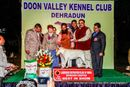 Doon Valley Kennel Club | labrador lineup,sw-143,