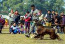 Doon Valley Kennel Club | afghan hound,sw-143,ex-56,