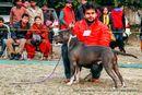 Doon Valley Kennel Club | american staffordshire terrier,sw-143,ex-29,