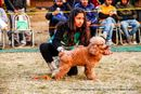 Doon Valley Kennel Club | poodle- toy,sw-143,ex-11,