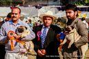 Doon Valley Kennel Club | bob,pug,rbob,sw-143,