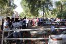 Gujarat Kennel Club | ground,sw-44,