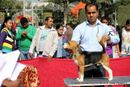 Gurgaon Dog Show (2 Feb 2014) | beagle,ex-35,,sw-113