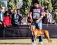 Gurgaon Dog Show 2013 | ex-153,sw-109,boxer
