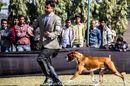 Gurgaon Dog Show 2013 | ex-158,sw-109,boxer