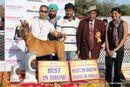 Jabalpur 2012 | bis,ex-89,sw-54,