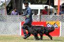 Jabalpur Dog Show 2013 | ex-150,new foundland,sw-81,
