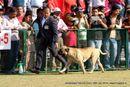 Jamshedpur Dog Show 2014 | bull mastiff,ex-162,sw-114,
