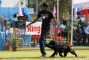 Jamshedpur Dog Show 2014 | cocker spaniel,ex-354,sw-114,