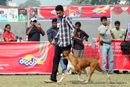 Kanpur Dog Show 2011 | boxer,ex-122,sw-42,
