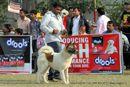 Kanpur Dog Show 2012 | akita,ex-103,sw-72,