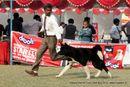 Kanpur Dog Show 2012 | akita,ex-102,sw-72,