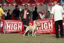 Kanpur Dog Show 2012 | ex-84,labrador retriever,sw-72,