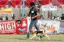 Kanpur Dog Show 2012 | beagle,ex-40,sw-72,