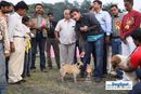 Kanpur Dog Show | ex-9,lineup,pug,sw-7,