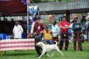 Kodaikanal Dog Show 2010 | labrador,