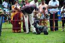 Kodaikanal Dog Show 2010 | cocker,