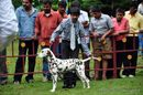 Kodaikanal Dog Show 2010 | child handler,