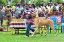 Kodaikanal Dog Show 2010 | great dane,