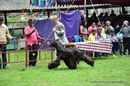 Kodaikanal Dog Show 2010 | afghan hound,