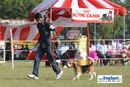 Lucknow Dog Show 2010 | sw-8, beagle,ex-62,