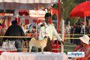Lucknow Dog Show 2010 | sw-8, ex-23,pug,