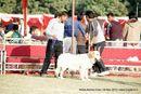 Noida Dog Show 2013 | golden retriever,sw-99,