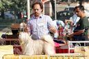 Noida Dog Show 2013 | ex-58,lhasa apso,sw-99,