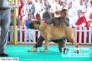 ooty dog show 2009 | mastiff,