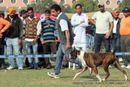 Patiala Dog Show 2013 | boxer,ex-255,sw-80,