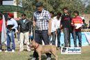 Pitbull | Terrier,