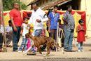 The Salem Acme Kennel Dog Show | boxer,ex-126,sw-85,