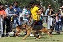 Vadodara Dog Show | ex-133,german shepherd,sw-83,