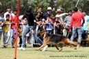 Vadodara Dog Show | ex-136,german shepherd,sw-83,