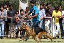 Vadodara Dog Show | ex-139,german shepherd,sw-83,