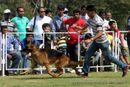 Vadodara Dog Show | ex-140,german shepherd,sw-83,