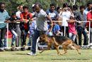 Vadodara Dog Show | ex-141,german shepherd,sw-83,