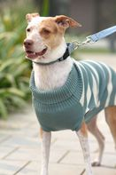 Mutt of Course Dog Sweater Emerald - Small