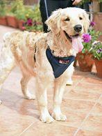 Mutt Of Course Organic Dark Denim Harness For Dogs - Small