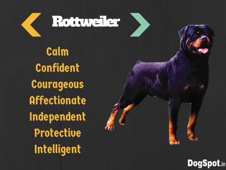 Rottweiler (18)