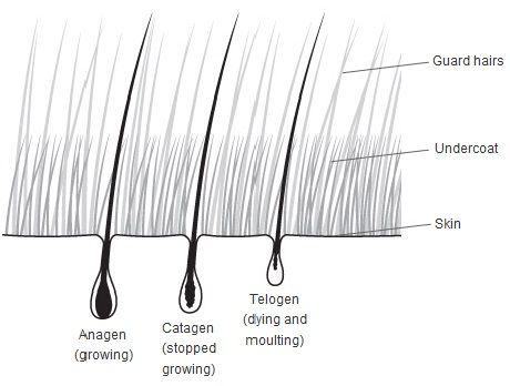 Dog hairs