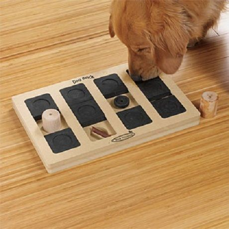 Creative Board Games to keep your Pet Busy & Happy