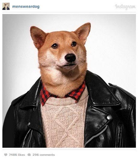 mens wear dog