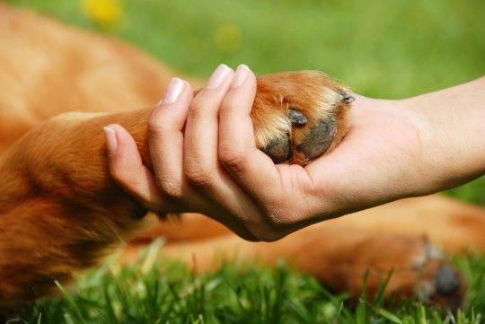 dog-hand-shake-540x361