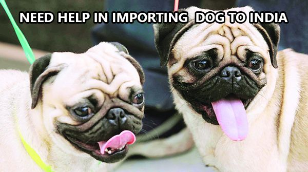Importing-a-dog