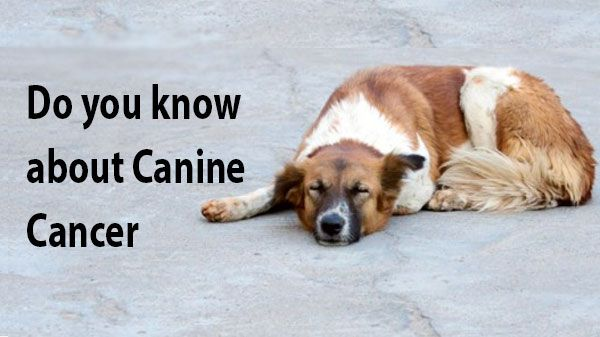 canine-cancer