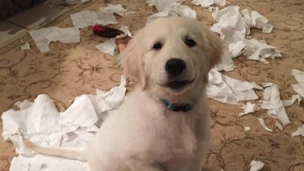 puppy-mess