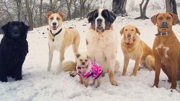 snowdogs_808x500