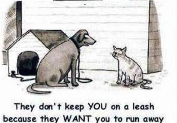 Dog-vs-cat