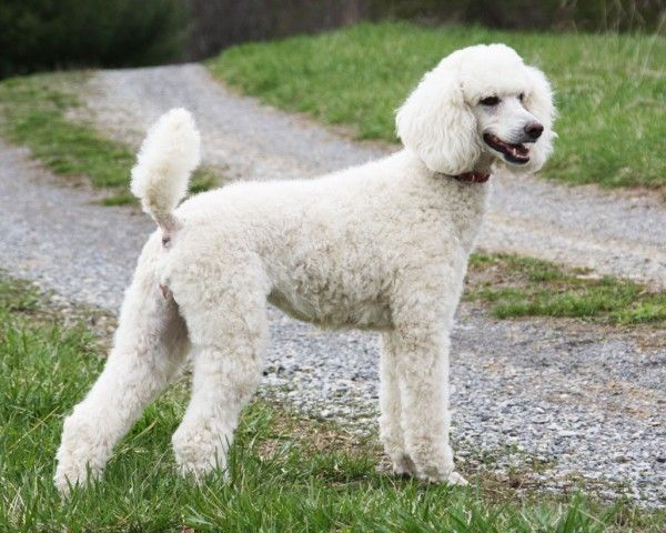 5 Dog Beautiful Breeds With Double Coats   Dogspot.in